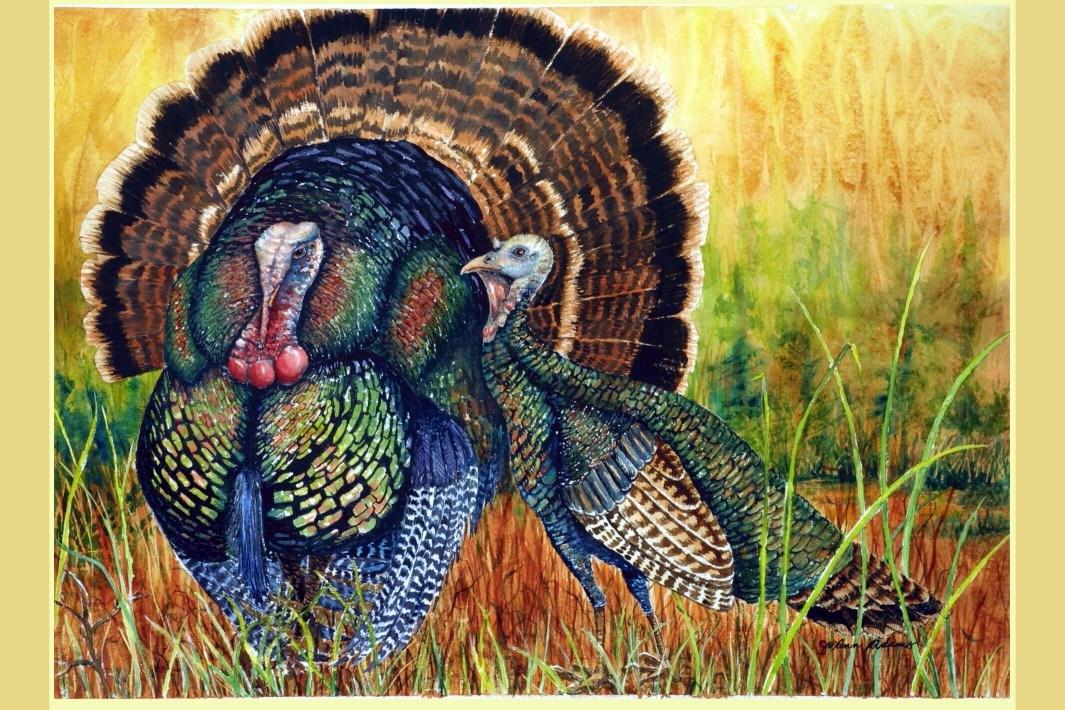 Watercolor 'Turkeys in their Glory'