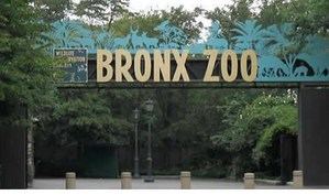 bronx-zoo-v3.jpg
