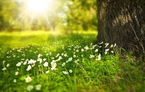 spring-tree-flowers-meadow-60006.jpg