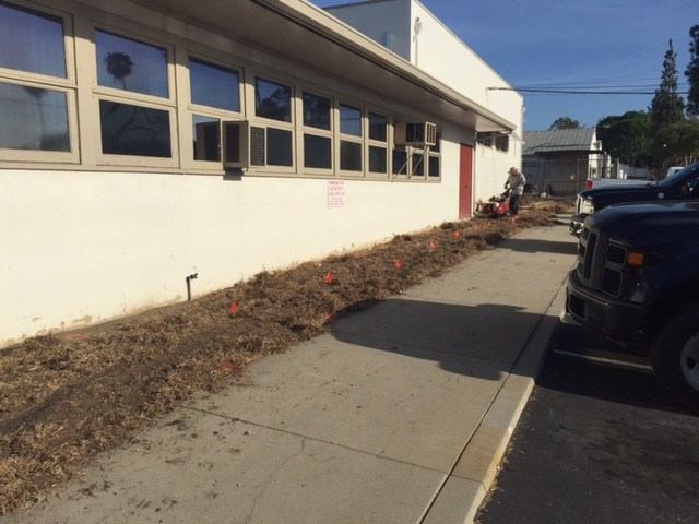 Removing grass at the district office
