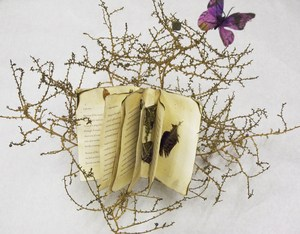 hayleys tumbleweed book1.jpg