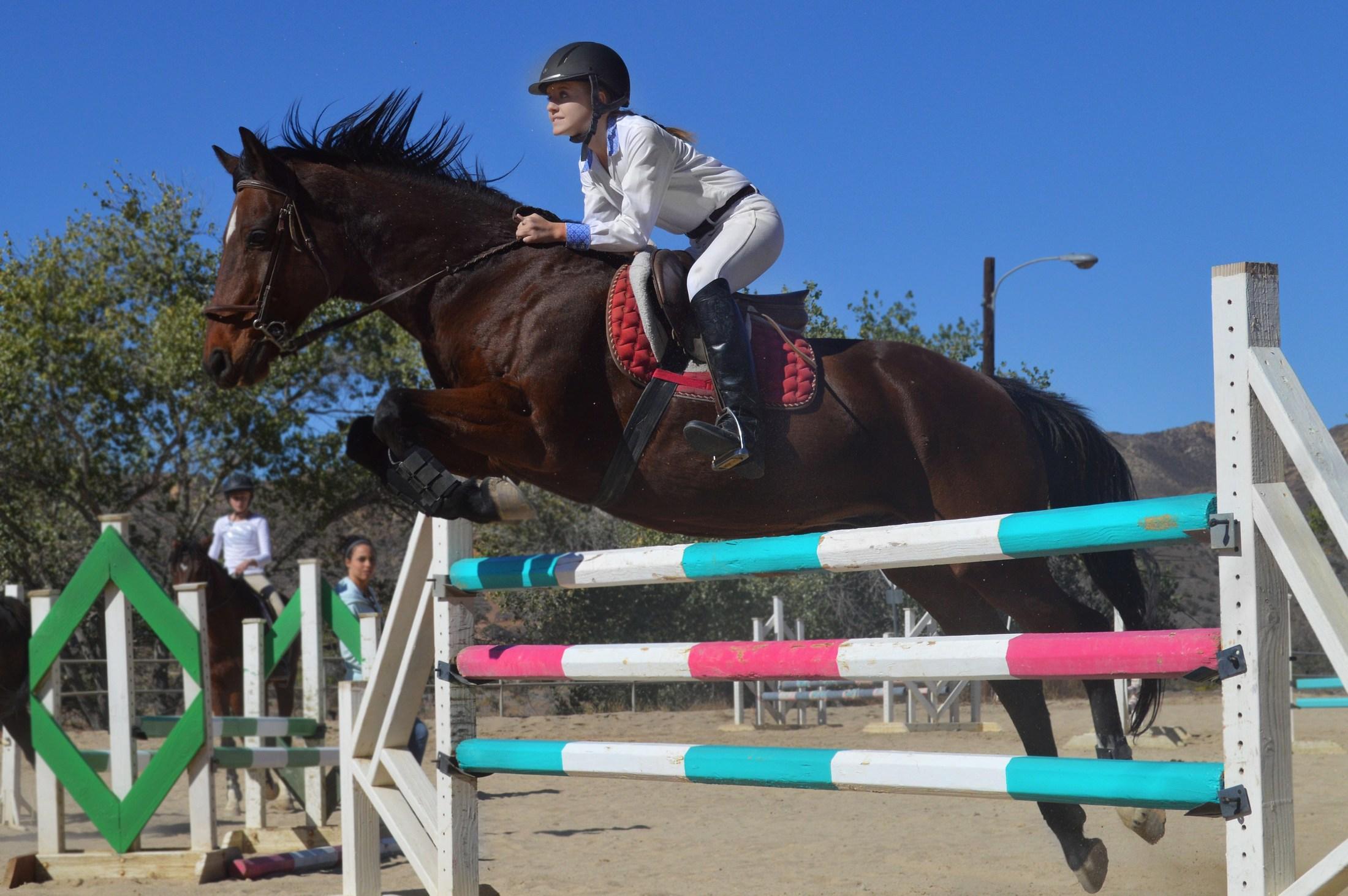 Lauren Olmeda riding Bizmarck