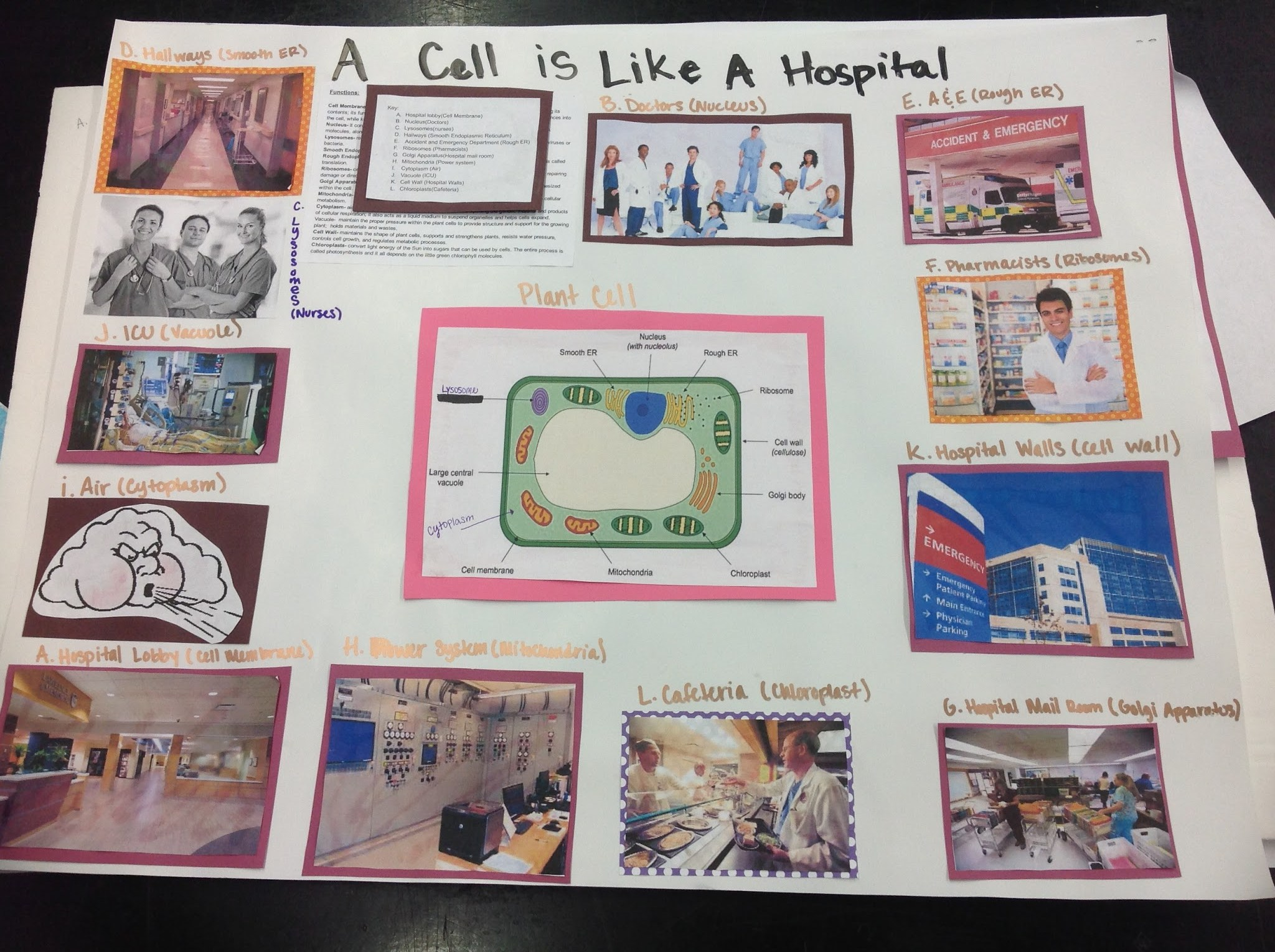 animal cell analogy