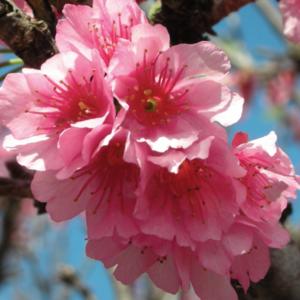 LoriAnn Iwata's Profile Photo