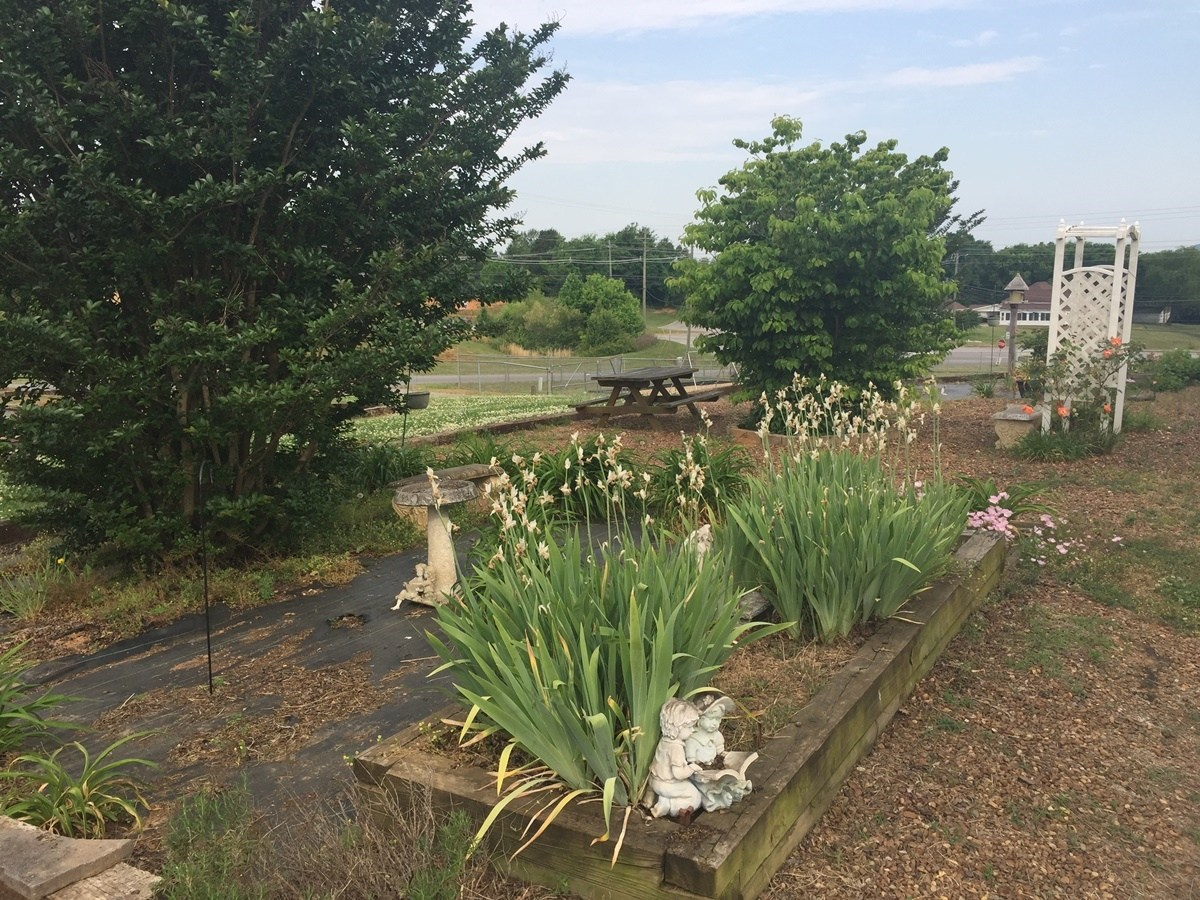 Picture from our school reading garden