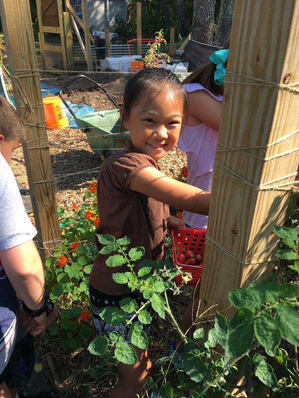 Grade 3 Garden Harvest