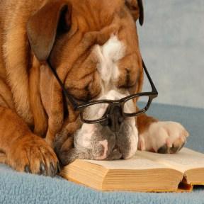 BPU Smart Dog.jpg.png