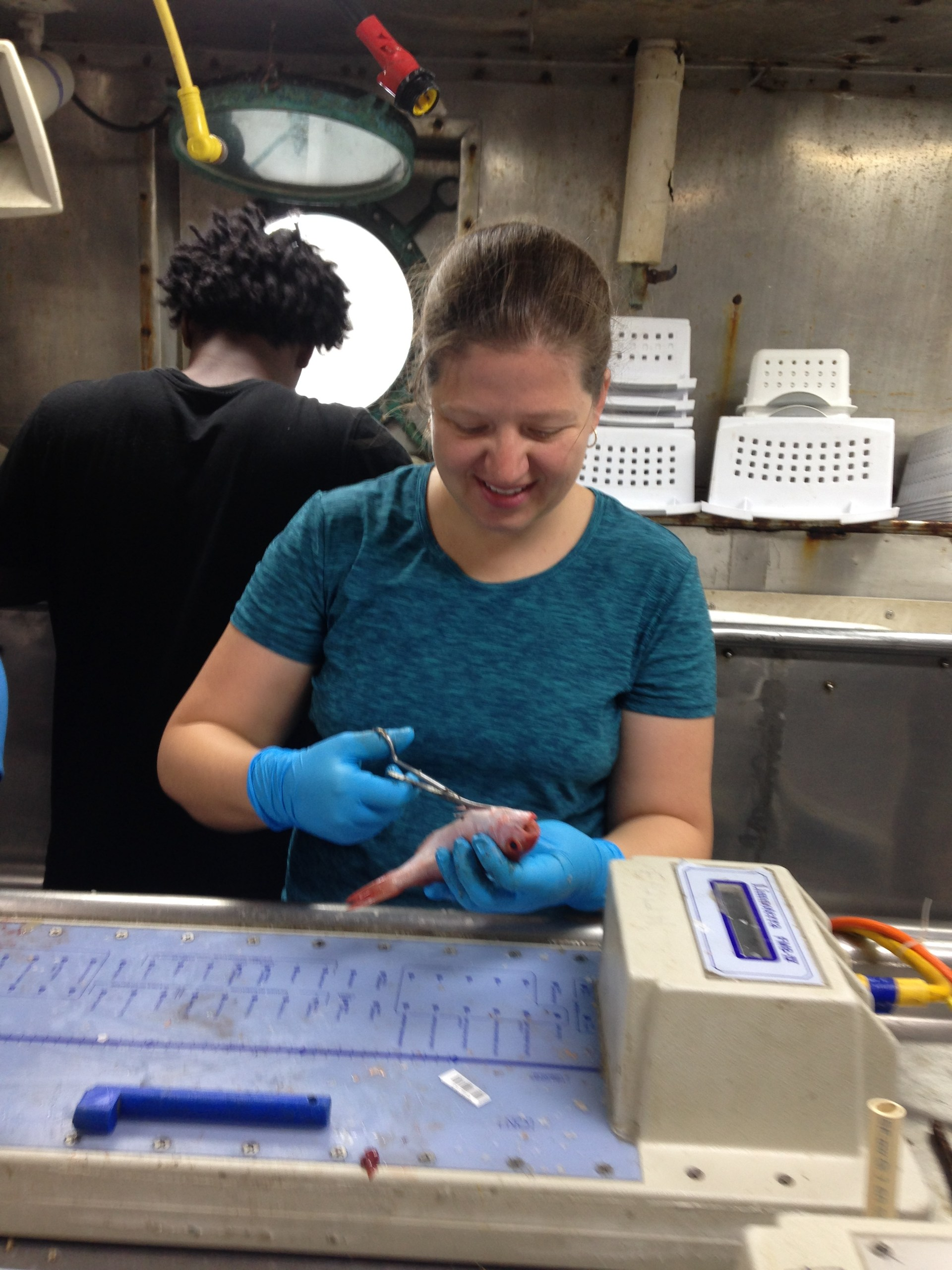 Dissecting fish in the wet lab aboard the Oregon II.