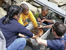 Student learn about Bronx River Ecology