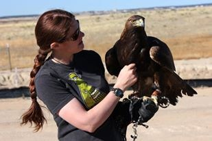 Me and a friend's golden eagle, Miles.