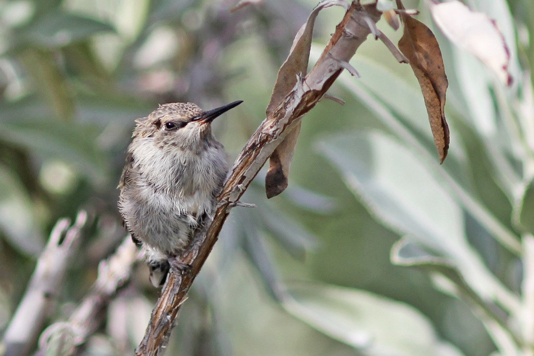 Close up hummingbird on a branch