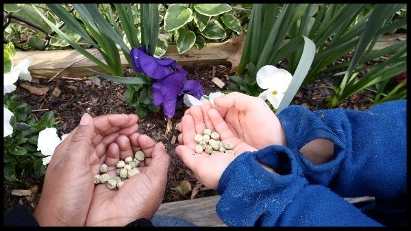 Hands Holding Seeds