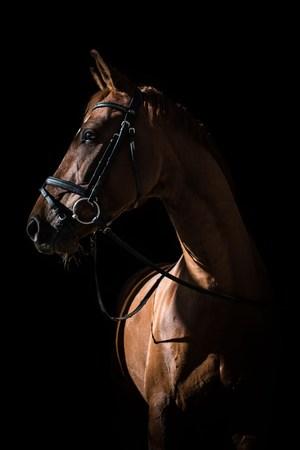 Dancello. Photo of a horse.