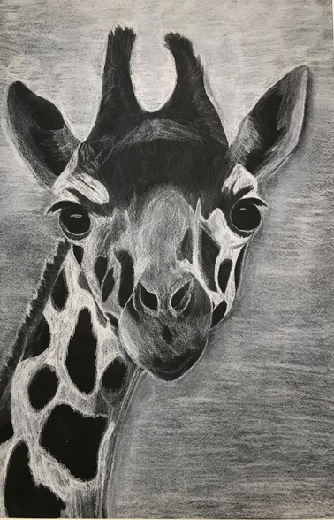 Drawing of a giraffe