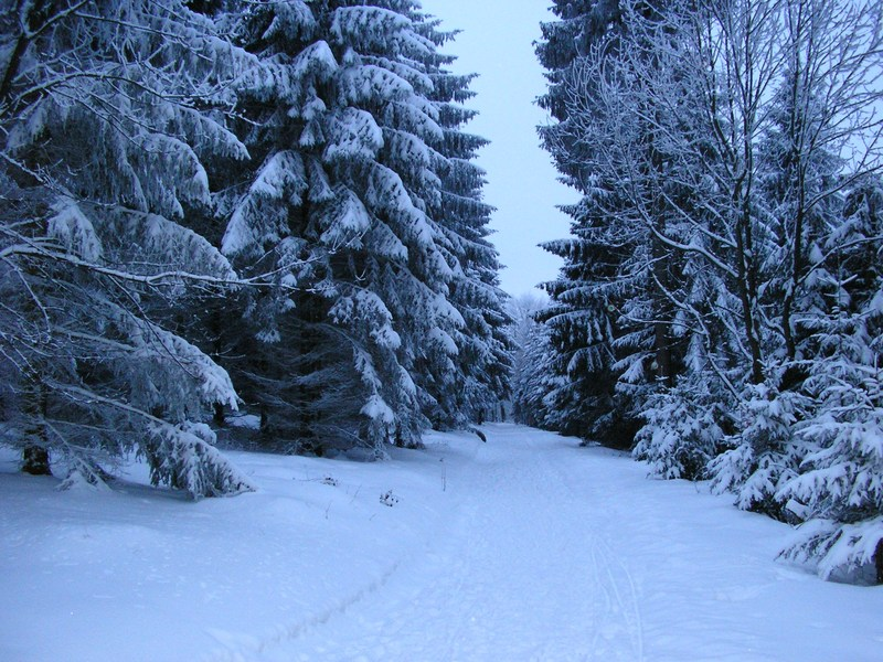 Snowy path with trees.