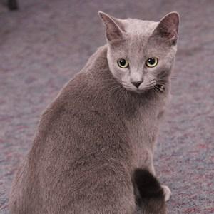 Olivia the Cat's Profile Photo