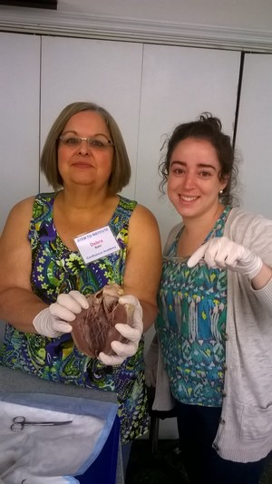 Teachers holding sheep heart, dissection