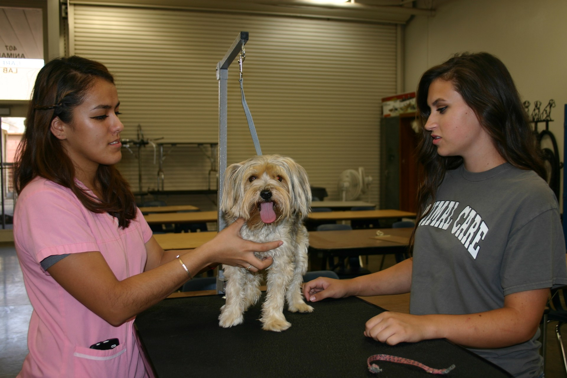 Students with dog in animal care class