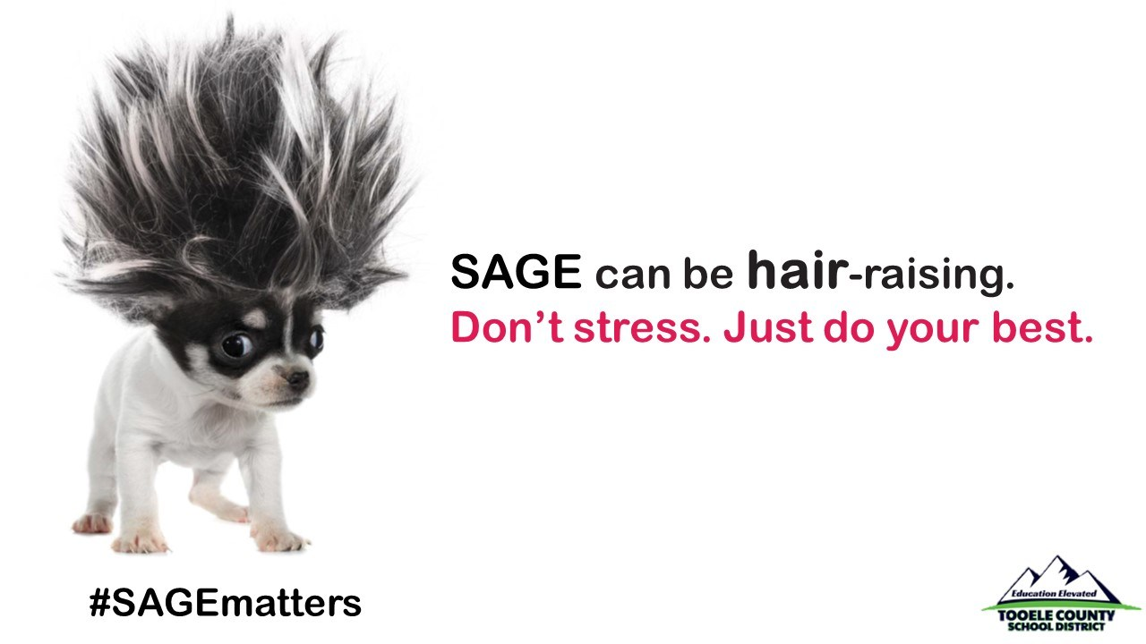 SAGE Dog w/hair