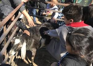 Petting Goat 2.jpg