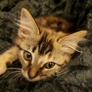 Cheri Totty's Profile Photo
