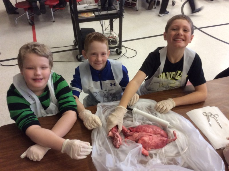 5th Gr. Lung Dissection