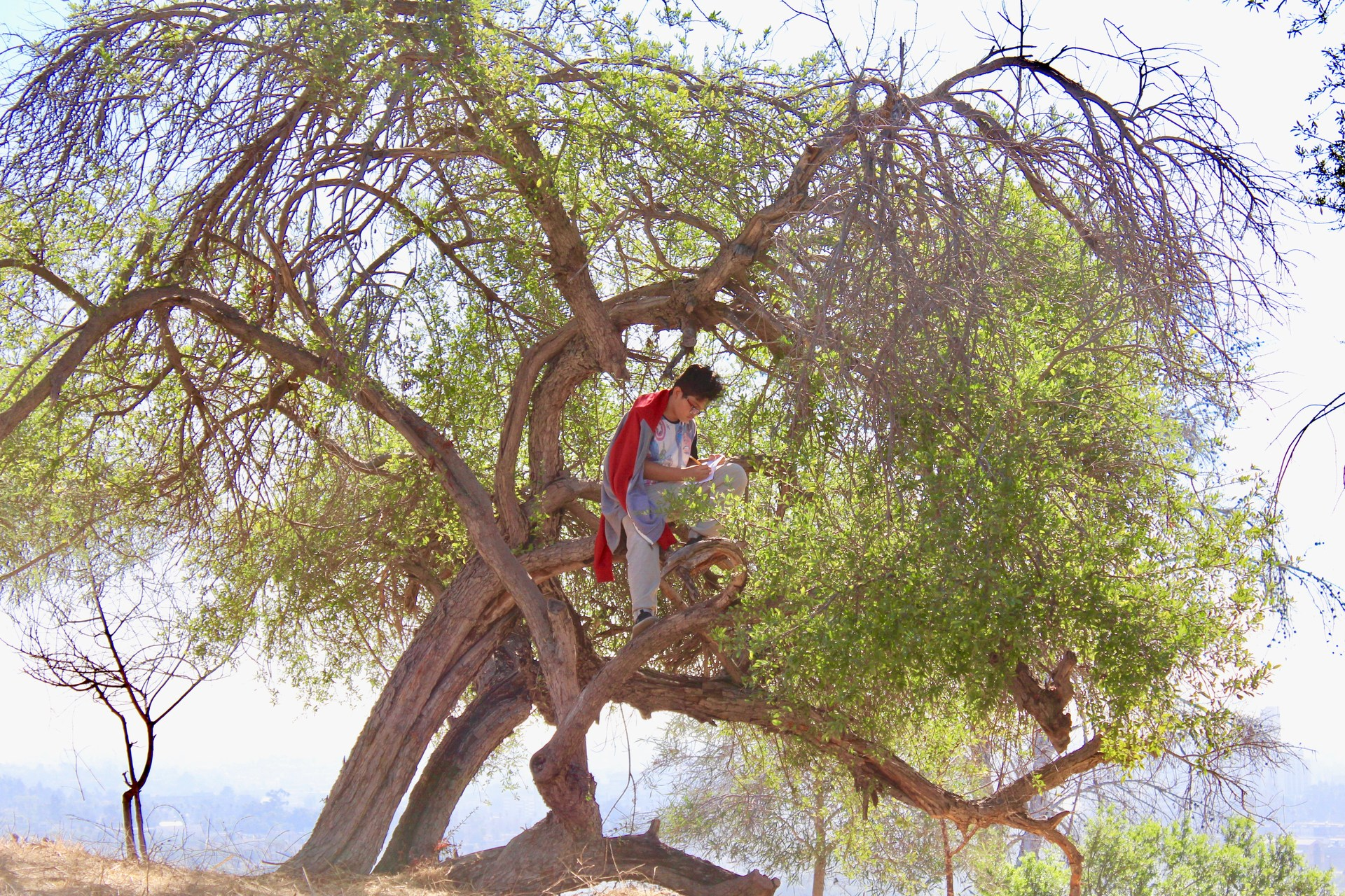 Student studying up in a tree