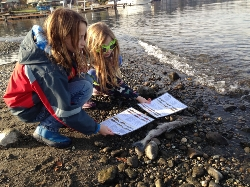 Students investigating salmon.jpg