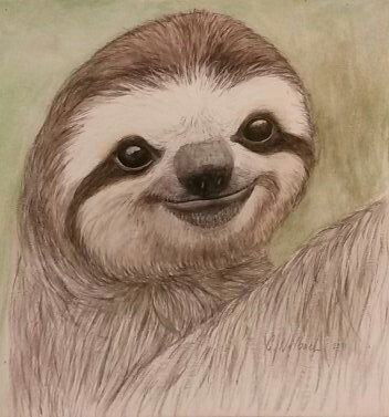 Watercolor painting of a sloth