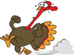 turkey running.jpg