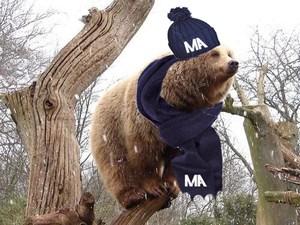 snowy bear on limb.jpg