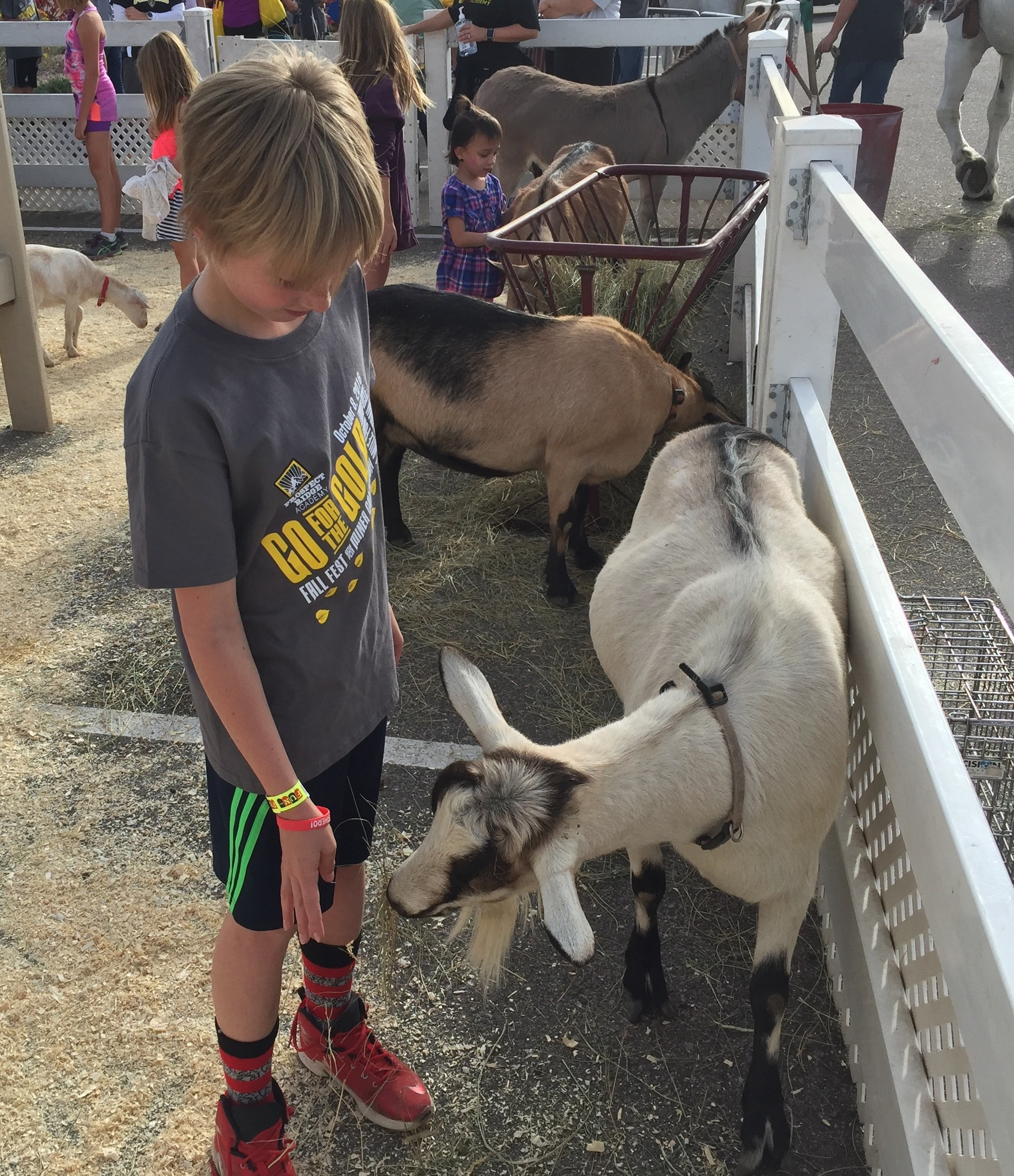 Boy petting a goat