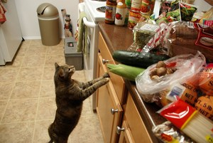cat looking at counter full of food