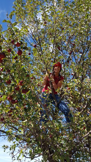 Person climbing an apple tree.