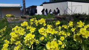 Sylvandales's flowering garden