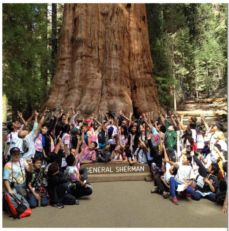 Students pose in front of sequoia tree.
