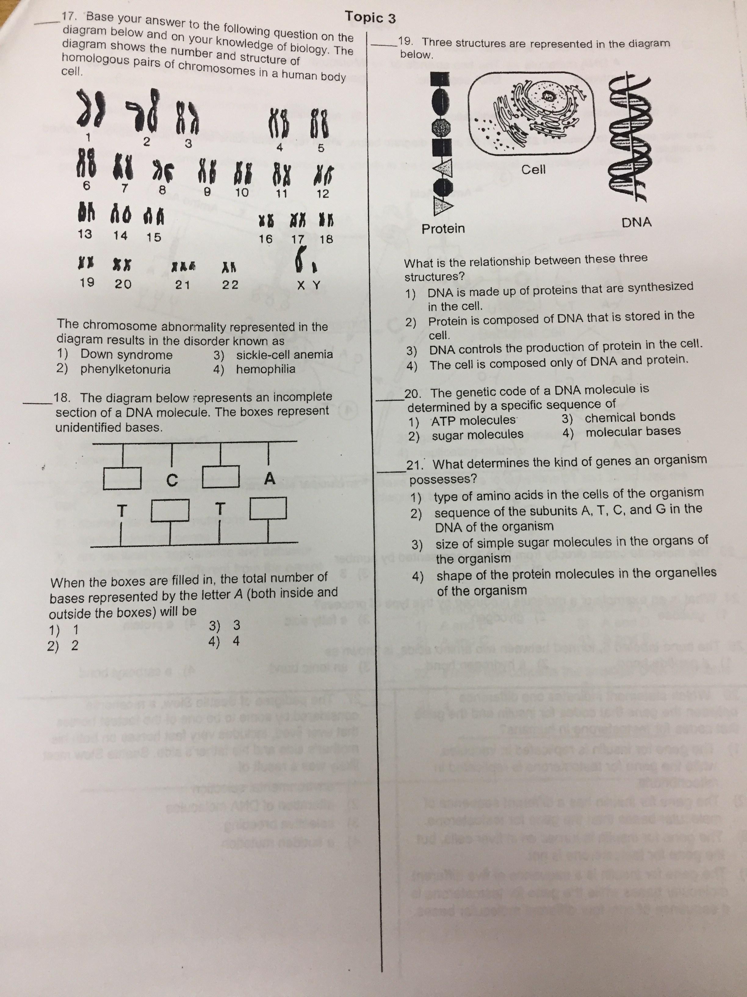 worksheet Section 14 2 Human Chromosomes Worksheet Answers al madinah school due tuesday february 13