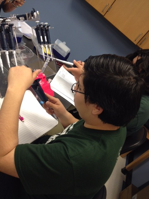students practice using micro-pipettes and perform a PCR lab at UCR
