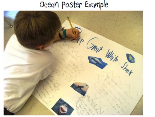 img srch elementary poster project great white shark