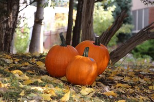 Photo of pumpkins and fall leaves.