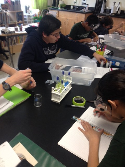 Here the sophomores are conducting a lab they designed to test the effects of environmental changes on the reaction rate of peroxidase