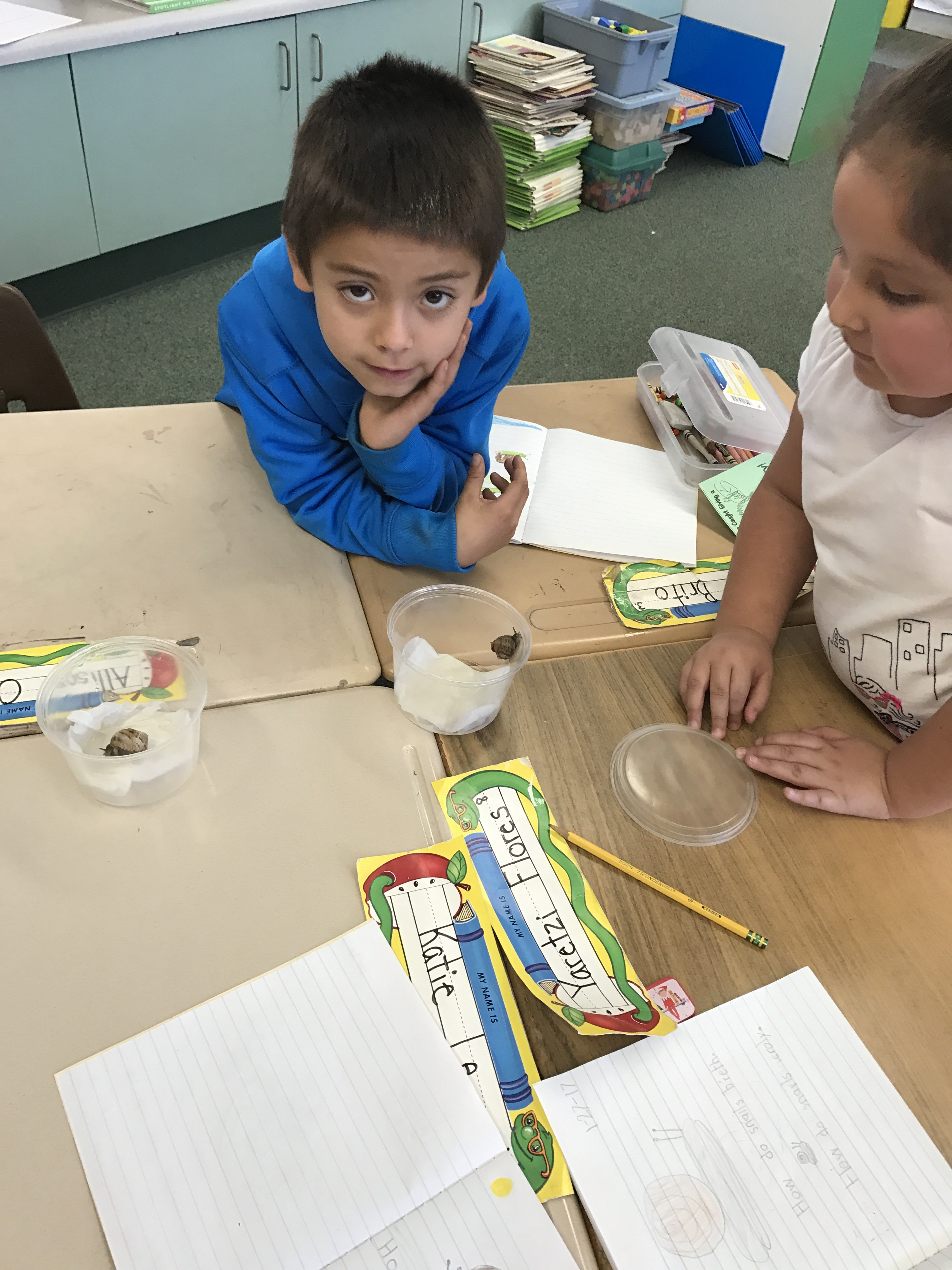 Investigating snails