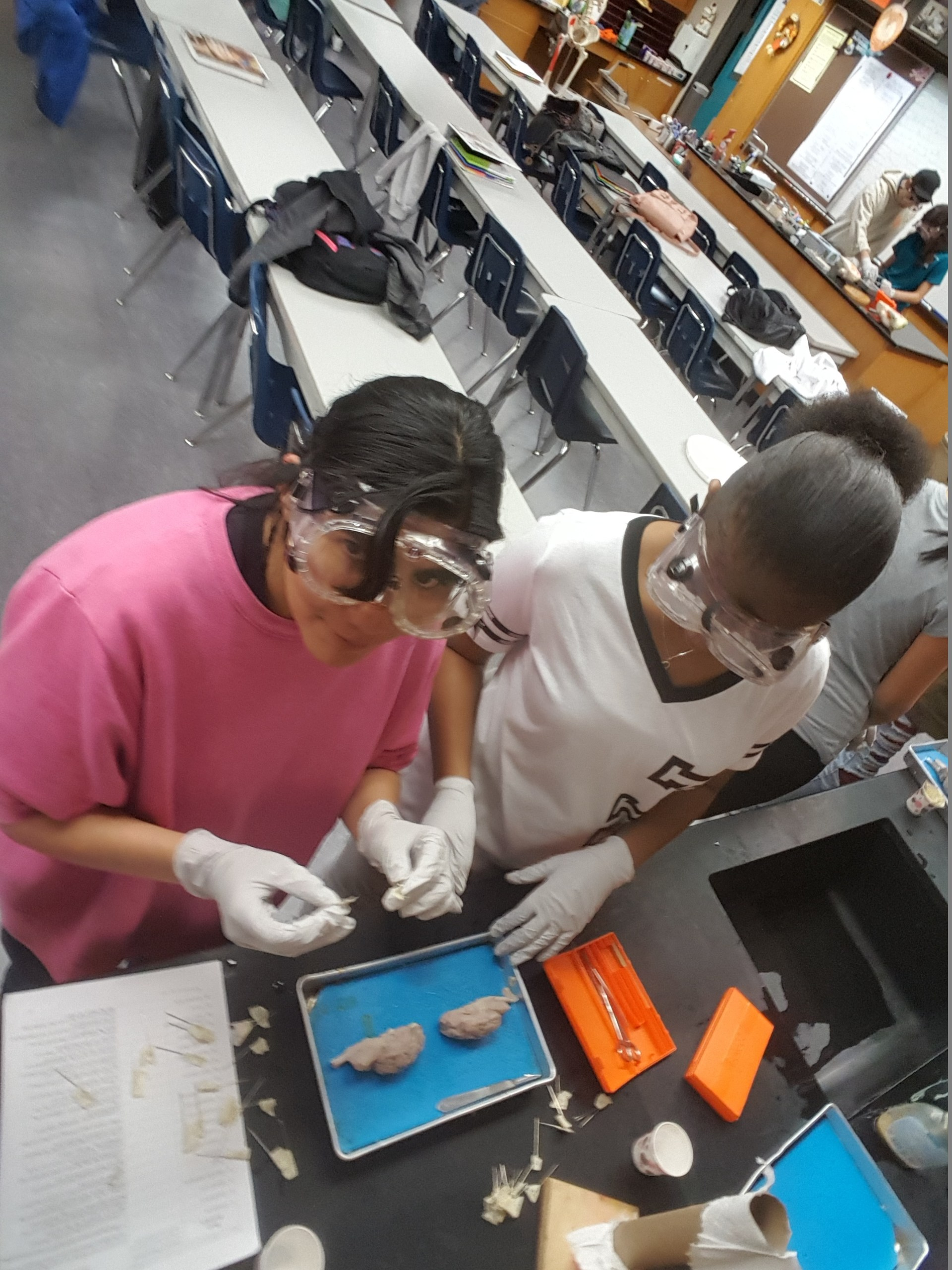 Anatomy Labs