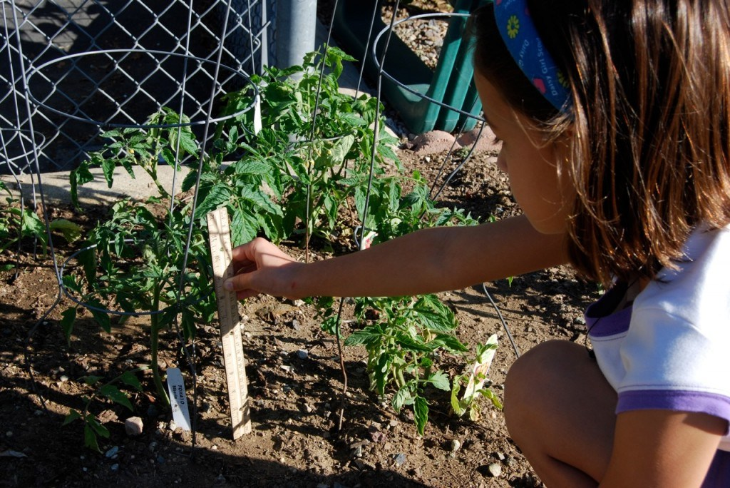Students learn garden care and maintenance.