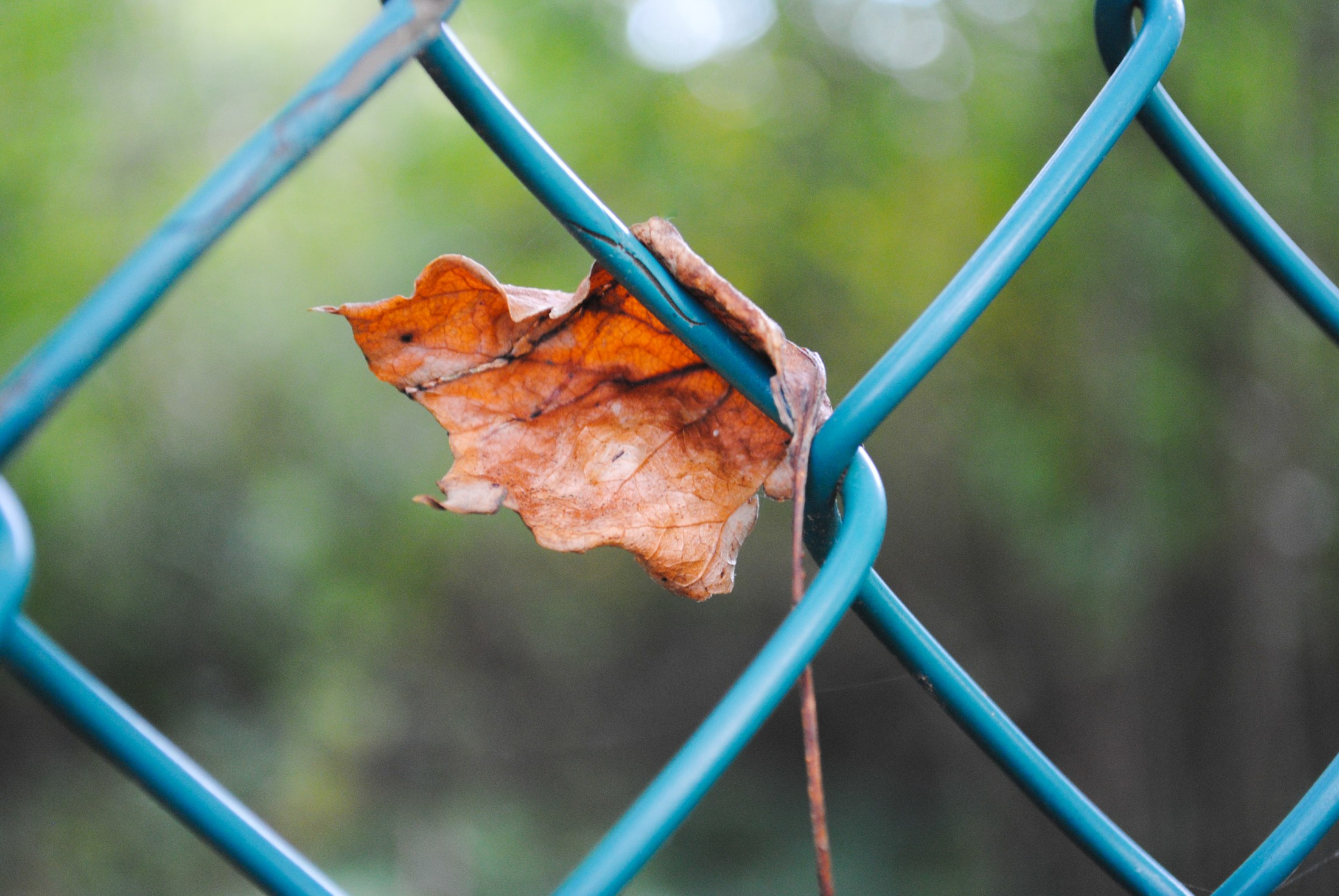 leaf stuck in fence