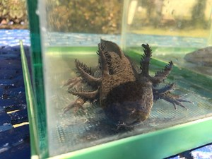 El Rosedal México visita el Centro de Investigaciones Biológicas  8.jpg