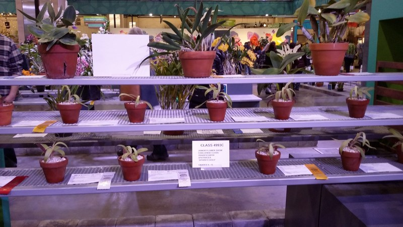 Juniors have great success at the Philadelphia Flower Show Featured Photo