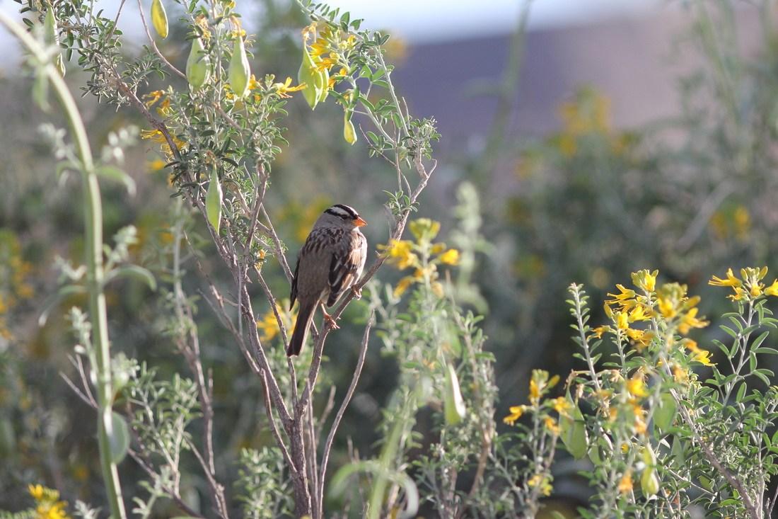 Hummingbird in a bush