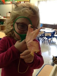 A three year old student wearing green glasses looking through a magnifying glass at a leaf.