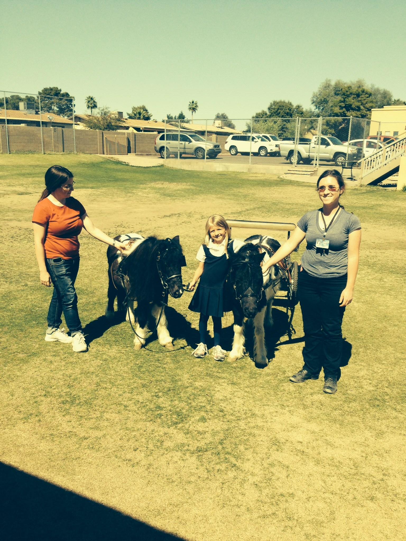 Miniature horses visit campus